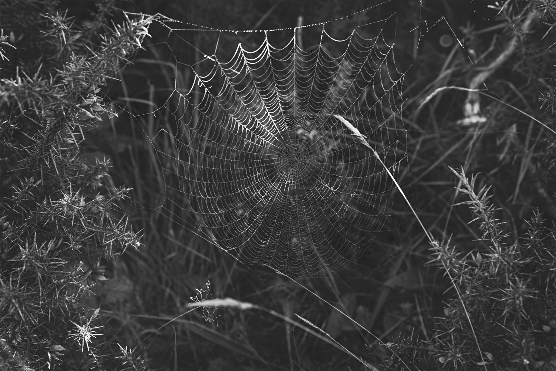 Das Wyrd – Die Fäden des Lebens