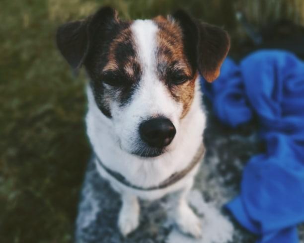 Funktioniert Tierkommunikation wirklich?